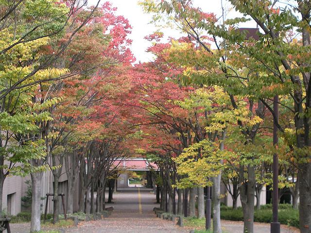 首都大学東京9号館前の紅葉